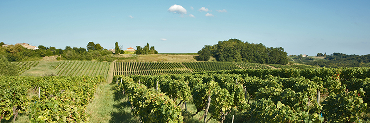 droit viticole droit vinicole
